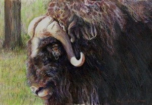 2014-WildlifeENTRIES_Page_41_Image_00011-1080x750